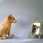 Собака лает на зеркало
